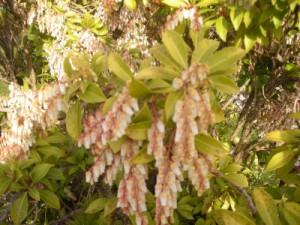 flowering-bush
