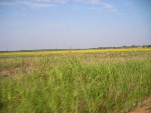 Trip to Texas (31)